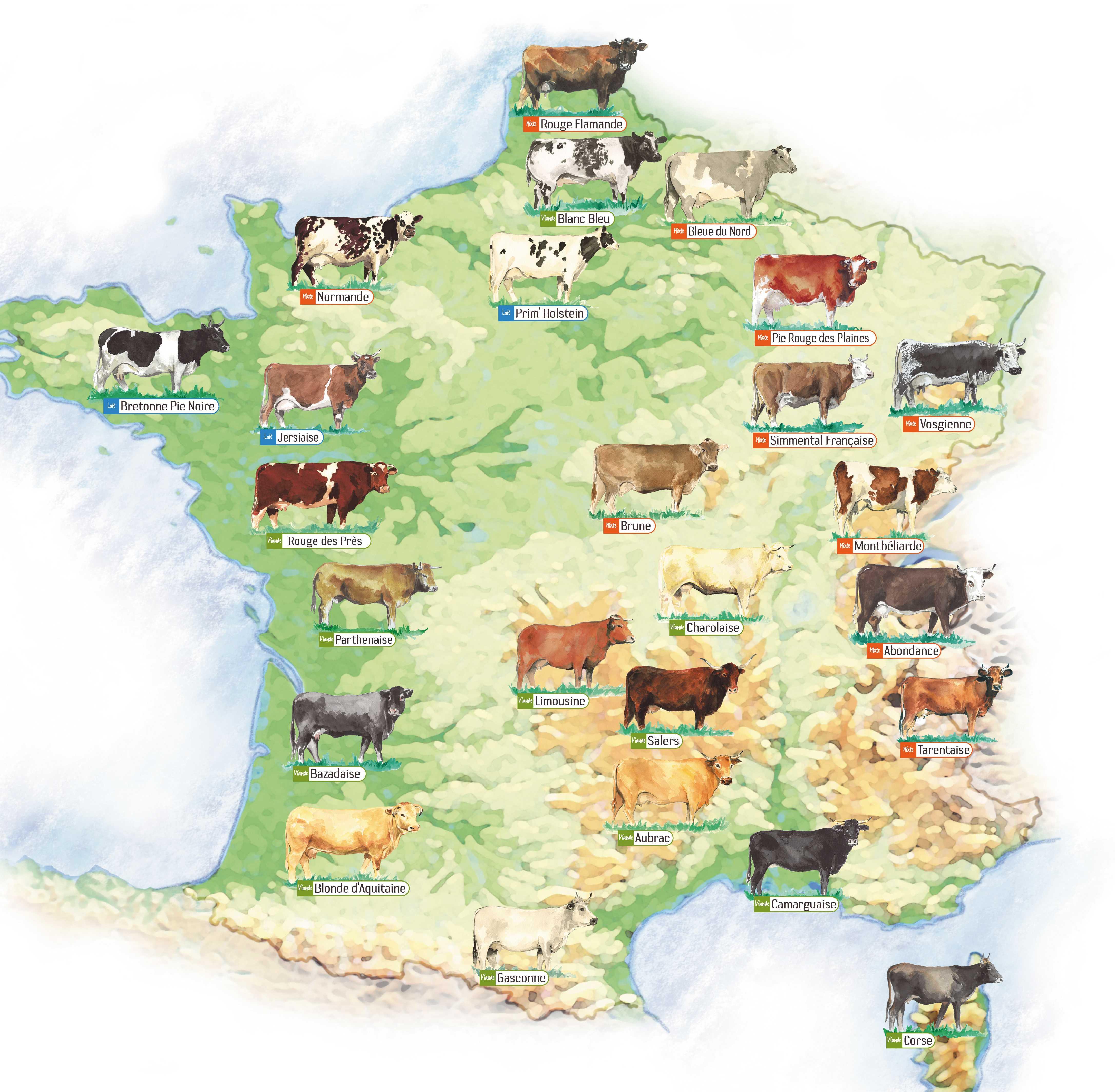 Carte_des_races_bovines-2